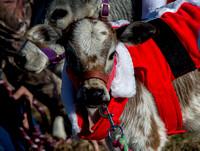 2016 Leiper's Fork Christmas Parade